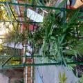 Sumgrower420